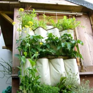 Hướng dẫn cách trồng rau sạch trong túi vải